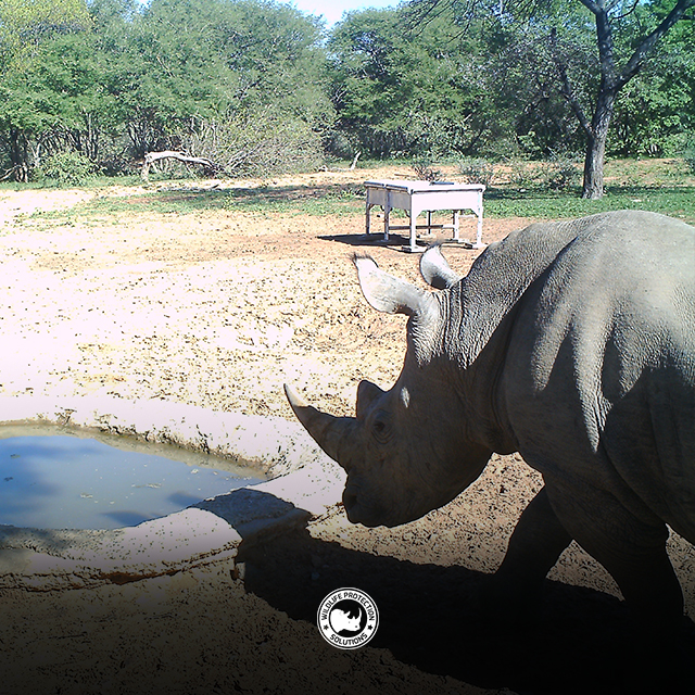 Rhino at watering hole