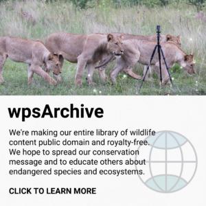 wpsArchive graphic - square